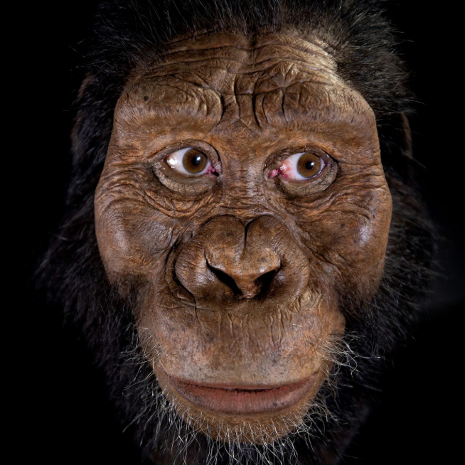 Scientists Put A Face On An Ancient Human Ancestor (#GotBitcoin?)