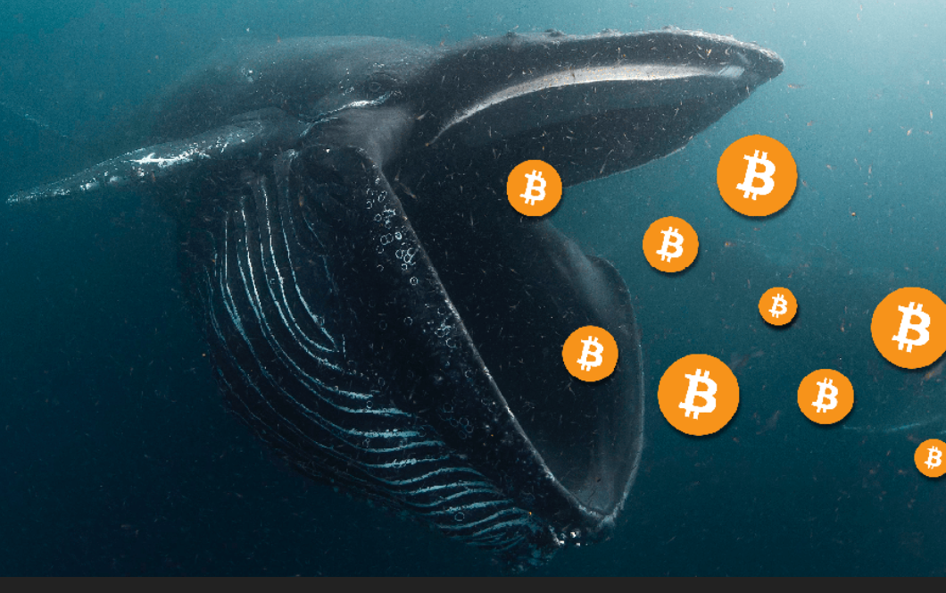 Ultimate Resource On Bitcoin Whales (#GotBitcoin?)