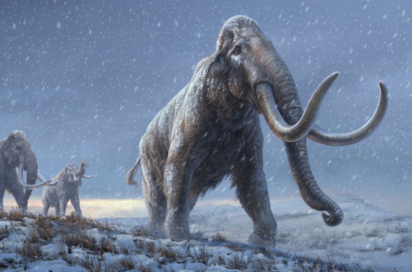 Scientists Use Crspr To Bring Woolly-Mammoth Back To Life