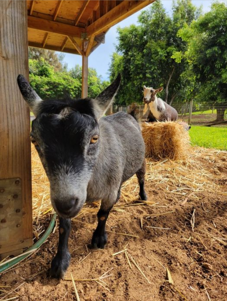 Crypto Twitter Decodes Why Zuck Really Named His Goats 'Max' And 'Bitcoin'